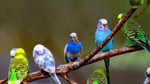 Здоровье домашних птиц